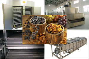 Blueberry Fruit Dryer to Produce High-Quality Dried Blueberry pictures & photos