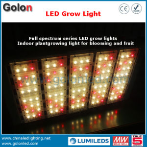 Manufacturer IP65 Waterproof High Power Plant Grow Lighting IP65 Factory 200W LED pictures & photos