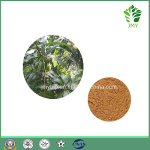 Anti-Oxidiant Mango Leaf Extract Mangiferin 5%-95% pictures & photos