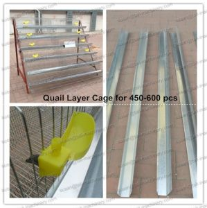 Hot Sales Poultry Quail Cages for 500 PCS