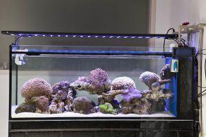 Dimmable Timing Setting LED Aquarium Light