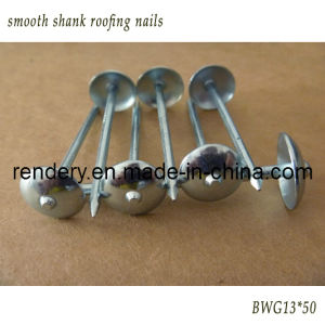 Screw/Smooth Shank Umbrella Roofing Nail pictures & photos