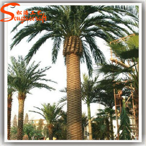 Outdoor Large Artificial Fiberglass Date Palm Tree pictures & photos