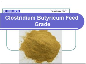Clostridium Butyricum Feed Grade for Feed Additives