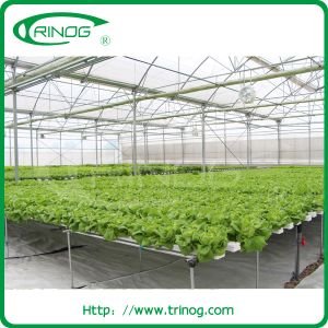 Flat channel hydroponics system for nft growing pictures & photos