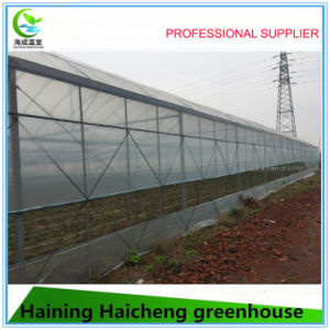Multi Span Film Greenhouse for Vegetable Growing pictures & photos
