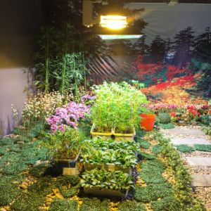 600W 2000k Double-Ended HPS Horticultural Light pictures & photos