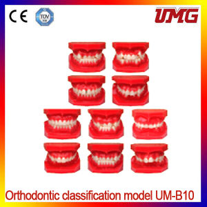 Hot Sale Orthodontic Classification Dental Model pictures & photos
