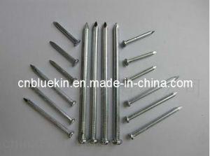 Nails (OKI-10171545)