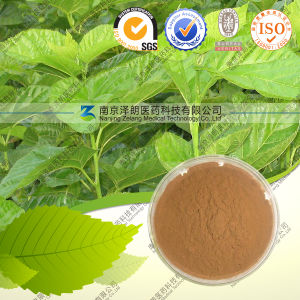 Manufacturers Powdered Mulberry Leaf Extract pictures & photos