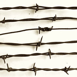 Electro Galvanized Iron Barbed Wire for Fence pictures & photos