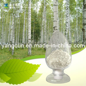 Natural Birch Bark Extract Betulin 98% pictures & photos