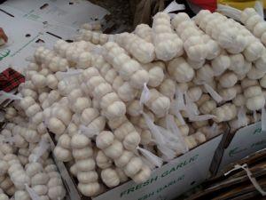 China Shandong Fresh Normal White Garlic pictures & photos