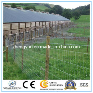 Best Price Hot Dipped Galvanized Fixed Knot Field Fence pictures & photos