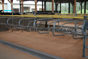 Hot Galvanized High Quality Cattle Stall pictures & photos