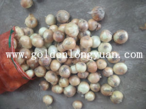 Chinese New Crop Fresh Yellow Onion pictures & photos