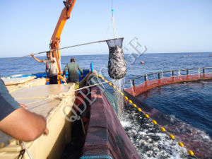 HDPE Round Cage/ Fish Farming pictures & photos