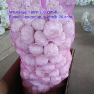 Top Quality New Crop Raw Normal/Pure White Garlic pictures & photos