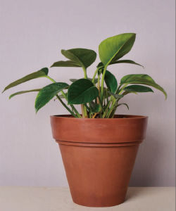 Recycled Plastic Flower Pot-10edf35