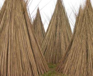 Natural Bamboo Cane pictures & photos