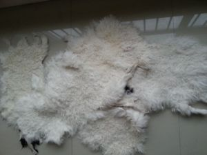 China Wholesale Sheepskin for Sofa Covers/Clothing pictures & photos