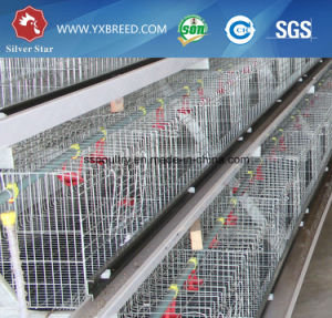 Chicken Cages / Broiler Cages / Poultry Cages (A3B126) pictures & photos