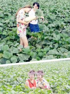 2015 New Crop Green Shine Skin Pumpkin Seeds to Europe pictures & photos
