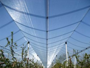 Anti Hail Netting for Fruit Protection in Agriculture pictures & photos