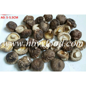 Top Quality Factory Price 5-5.5cm Dried Smooth Shiitake Mushroom pictures & photos