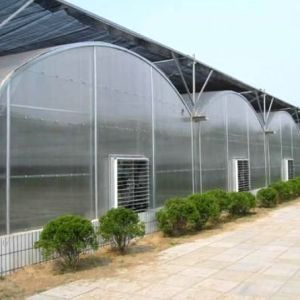 Vegetable Production Film Greenhouses China for Sale pictures & photos