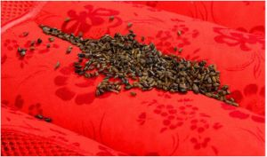 Red Pillow Cassia Seed Red Pillow for Wedding pictures & photos