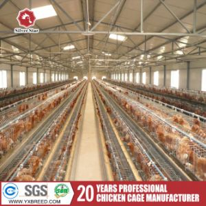 Factory Outlet a Type Layer Chicken Cage pictures & photos