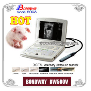 Digital Laptop Veterinary Ultrasound Scanner Ultrasound Imaging Bovine Ultrasound Swine Ultrasound Sonography pictures & photos