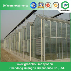 The Cheapest Agricultural Plastic Film Greenhouse with Hydroponics System pictures & photos