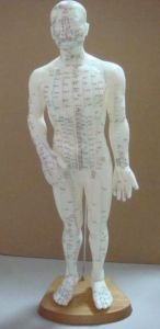 84cm Acupuncture Model - Whole Body Model pictures & photos