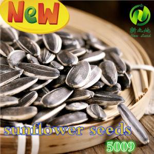 Export Chinese Good Quality Fresh Sunflower Seeds pictures & photos
