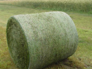 Top Quality 0.5m*1500m White Color Bale Net Pallet Wrap pictures & photos