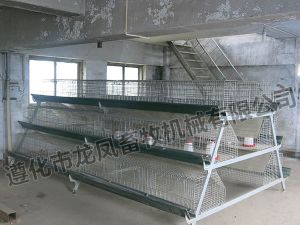 Galvanized a Type of Rearing Cage with Long Life Span pictures & photos