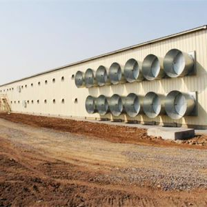 Environmental Control Poultry Equipment with Steel Structure House pictures & photos