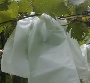 PP Nonwoven for Fruit Cover with Good Quality pictures & photos