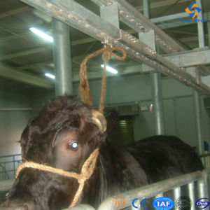 Cattle Slaughter Live Cattle Leading Equipment pictures & photos