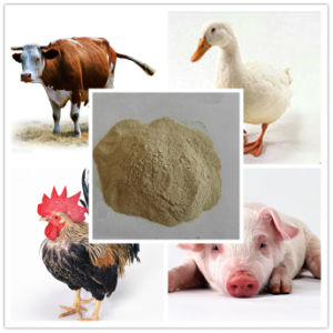 Animal Feed Grade Protein Yeast pictures & photos