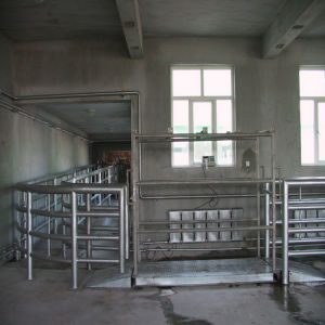 Slaughterhouse Machine Living Cattle Weight Scale Device pictures & photos