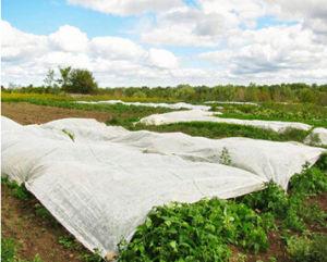 Polypropylene Spunbond Non Woven Fabric pictures & photos