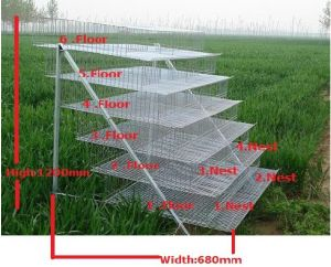 Hot Sales for Quail Battery Cages
