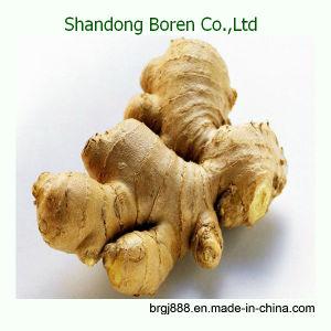 2015 Shandong Boren Hot Sale Fresh/ Dried Ginger