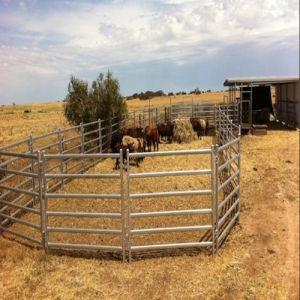 Australia 6 Rails 1.8m *2.1m Livestock Horse Fence Panels/Cattle Panels pictures & photos