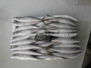 Frozen Fish Seafood Frozen Mackerel for Market pictures & photos