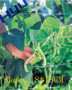 Vegetable Plant Support Net (Mesh 18*18)