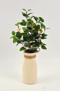 Various Herbs Plant (Thyme/Long Grass/Money Leaves) in Milk Bottle pictures & photos